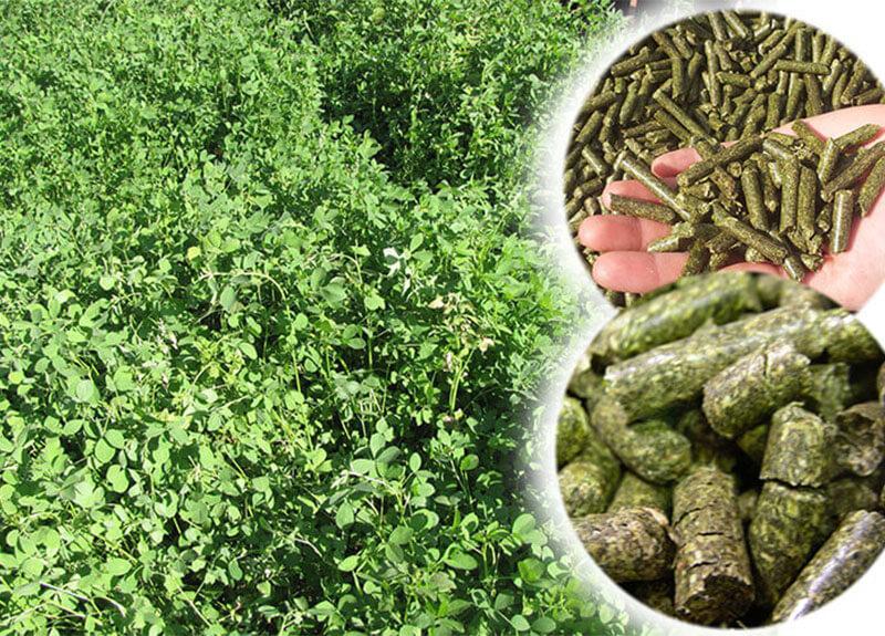 Alfalfa-Feed-Pellets