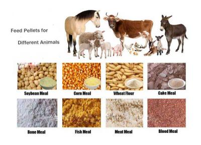 Animal-Feed-Pellets