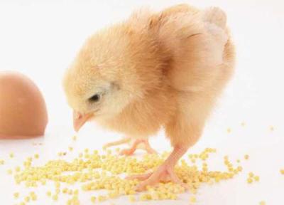 Chicken-Feed-Pellet
