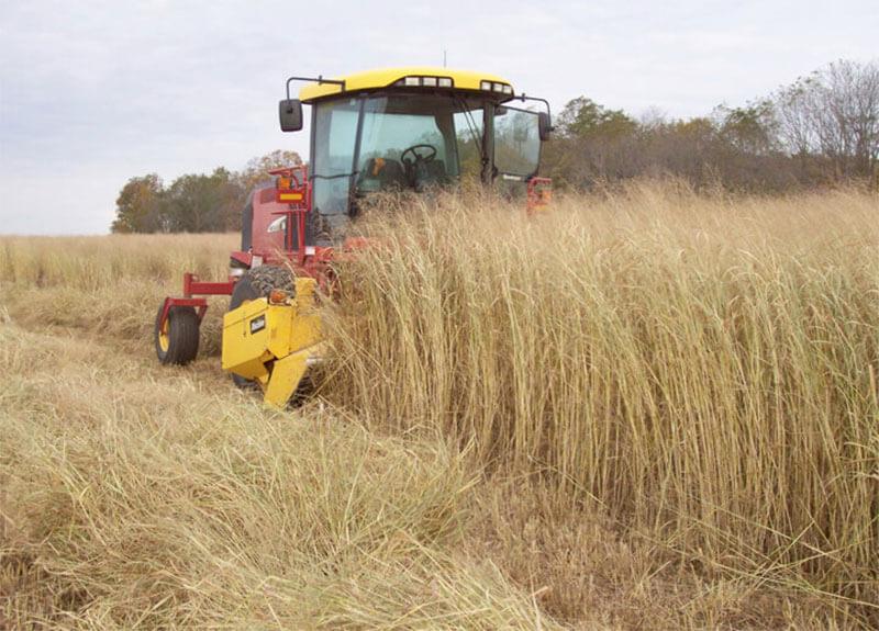 Farm-Switchgrass