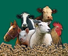 animals_feed_pellets