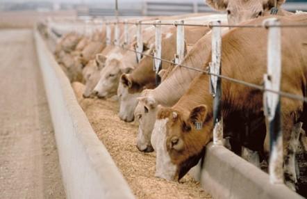 cattle_feed_pellets
