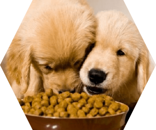 home dog feed pellets