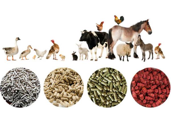 make-feed-pellets