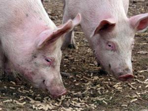 pig_feed_pellets