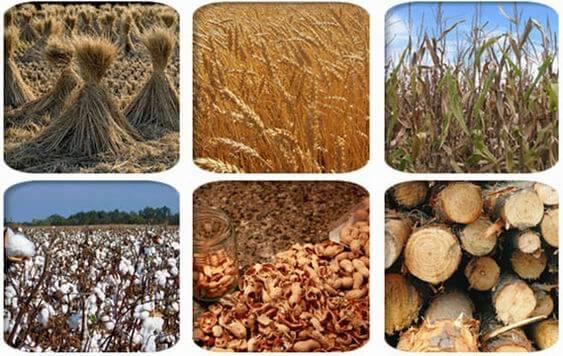 raw_materials_for_pellet_mill