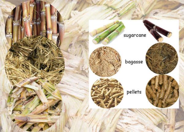 sugercane-bagasse-pellets